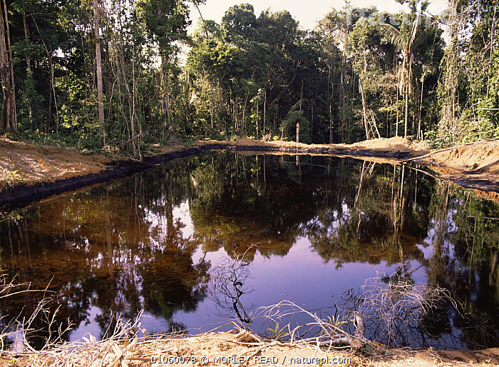 Pools of oily water beside oil well platforms. Amazonia, Ecuador, CRUDE OIL,DEFORESTATION,LANDSCAPES,POLLUTION,REFLECTIONS,SOUTH AMERICA,TROPICAL RAINFOREST, MORLEY READ