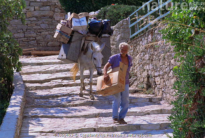 Garbage collector, with mule to carry rubbish, Alonissos Island, (Aegean) Greece, Donkey,EUROPE,GREECE,MAMMALS,MEDITERRANEAN,mule,PEOPLE,REFUSE,steps,TRADITIONAL,Transport,villages, Constantinos Petrinos