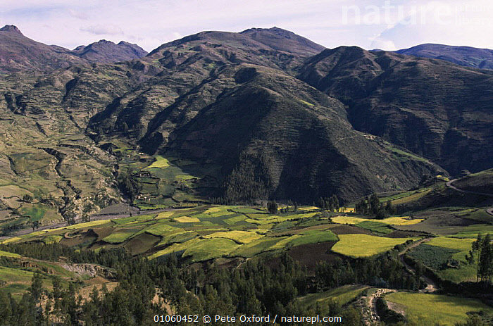 Farmland scenic near Cusco, Peru, South America, AGRICULTURE,ANDES,CULTURES,FARMLAND,HIGHLANDS,LANDSCAPES,MOUNTAINS,SOUTH AMERICA,VALLEY,VALLEYS,SOUTH-AMERICA, Pete Oxford