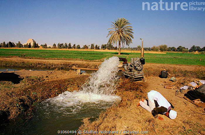 Egyptian man praying, irrigation methods and pyramid in background, Egypt., AFRICA,AGRICULTURE,BUILDINGS,CULTURES,EGYPTIAN,HORIZONTAL,IRRIGATION,LANDSCAPE,LANDSCAPES,MACHINERY,METHODS,MODERN METHODS,MUSLIM,NORTH AFRICA,PEOPLE,PRAYING,PYRAMID,RELIGION,STAFFAN,SWI,WATER,WIDSTRAND,NORTH-AFRICA, Staffan Widstrand