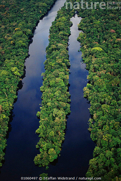 Aerial view of Amazon tropical rainforest, with river tributary, Manaus, Brazil., AERIAL,AMAZON,LANDSCAPES,MANAUS,RAINFOREST,RIVER,RIVERS,SOUTH AMERICA,STAFFAN,SWI,TRIBUTARY,TROPICAL,TROPICAL RAINFOREST,VERTICAL,VIEW,WATER,WETLANDS,WIDSTRAND ,AERIALS,SOUTH-AMERICA, Staffan Widstrand