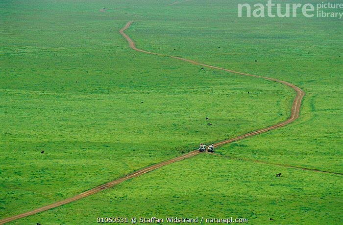 Ecotourism - safari jeeps on tracks in Ngorongoro Crater NR, Tanzania. Wildebeest, AERIAL,LANDROVER,LANDSCAPE,LANDSCAPES,ROADS,SAVANNA,TOURISM,VEHICLES,Grassland,Africa,EAST-AFRICA, Staffan Widstrand