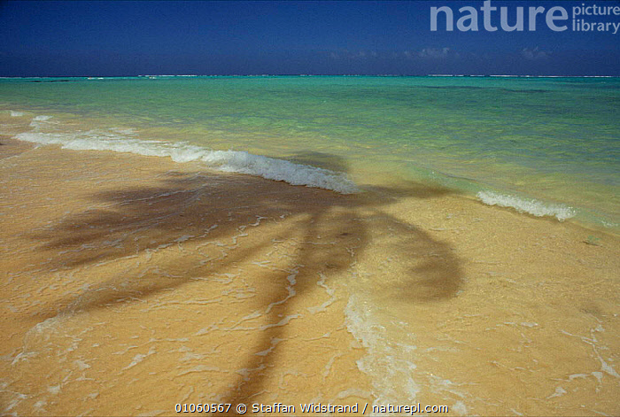 Palm tree shadow on beach nd sea shore, Tobago, Caribbean., BEACHES,CARIBBEAN,COLOURFUL,HOLIDAYS,HORIZONTAL,SKY,TREES,WATER,WEATHER,WEST INDIES,WIND,Concepts,Plants,Catalogue1, Staffan Widstrand