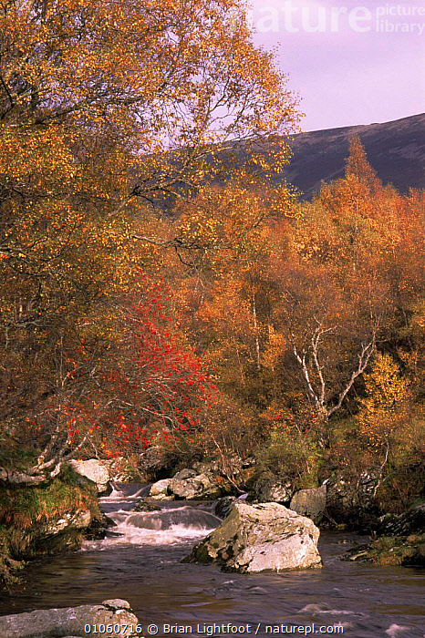 Strem at Glen Lethnot, Scotland UK, AUTUMN,EUROPE,LANDSCAPES,LEAVES,RIVERS,ROCK FORMATIONS,SCOTLAND,TREES,UK,VERTICAL,WOODLANDS,United Kingdom,Geology,Plants,British, Brian Lightfoot