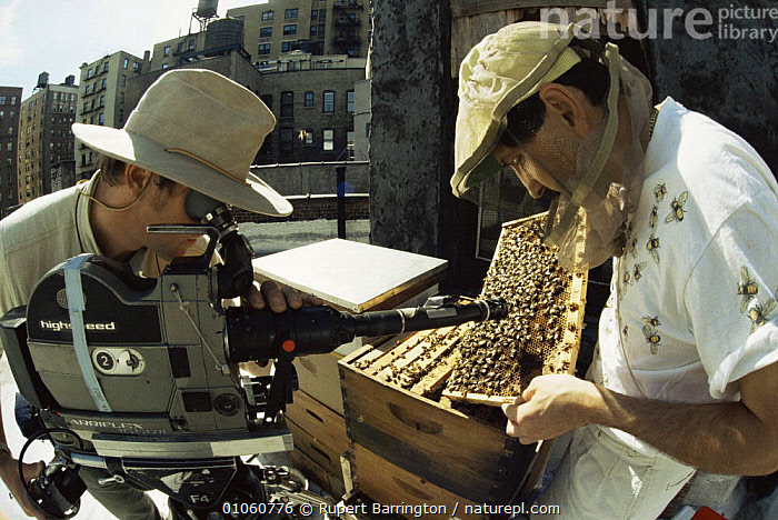 Cameraman Rod Clarke filming bee-keeper on top of apartment building, Manhattan, New York, for BBC Natural World programme: Metropolis. 1997, BEES,CITIES,FILMING,HORIZONTAL,INSECTS,NHU,PEOPLE,USA,North America,Invertebrates, Rupert Barrington