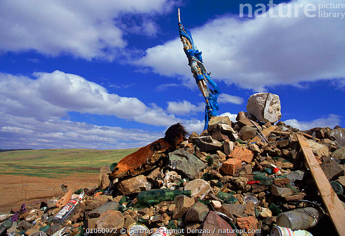 An 'Ovoo', a pile of rocks and natural materials at which offerings are made. Gobi Desert, Mongolia., DESERT,GDE,NATURAL,'OVOO',HORIZONTAL,GOBI,SKY,TRIBES,CULTURES,MATERIALS,NEUMANN DENZAU,PILE,OFFERINGS,ROCKS,TRADITIONAL,DESERTS,GERTRUD,RELIGIOUS,ASIA, Gertrud & Helmut Denzau