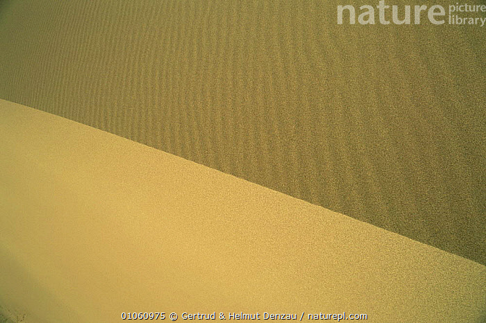 Abstract of sand dune, showing both sides of ridge, Gobi Desert, Mongolia., ABSTRACTS,ARTY SHOTS,ASIA,DESERTS,MONGOLIA,PATTERNS,SAND DUNES,VERTICAL, Gertrud & Helmut Denzau