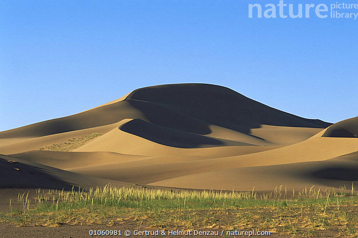 Landscape of sand dune system with grass in foreground, Gobi Desert, Mongolia., ASIA,DESERTS,HORIZONTAL,LANDSCAPES,MONGOLIA,SAND DUNES, Gertrud & Helmut Denzau