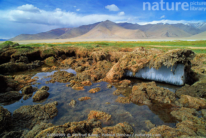 Permafrost on Tibetan Plateau, with mountains in background, Ladakh, North East India, ALPINE,ASIA,FROST,GEOLOGY,GLACIAL,glacial features,HIGHLANDS,LANDSCAPES,MOUNTAINS,permafrost,PLANTS,WATER,Weather,INDIAN-SUBCONTINENT, Gertrud & Helmut Denzau