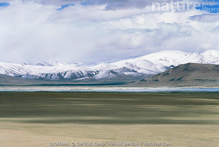 Tibetan Plateau landscape, with snow-capped mountains, Ladakh, North East India, ALPINE,ASIA,GLACIAL,GLACIAL FEATURES,HIGHLANDS,ICE,INDIAN SUBCONTINENT,LANDSCAPES,MOUNTAINS,plateau,SNOW,Geology,INDIAN-SUBCONTINENT, Gertrud & Helmut Denzau