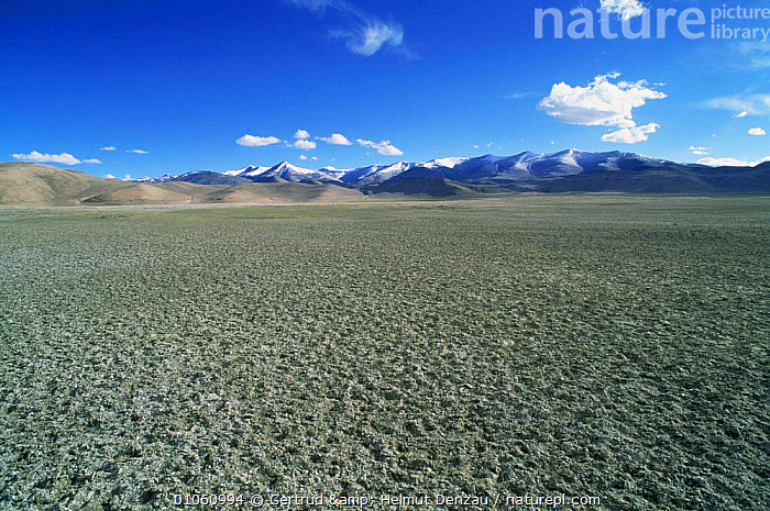 The barren permafrost of the Tibetan Plateau with Himalayan mountain range in background, Ladakh, North East India, ALPINE,ASIA,barren,HIGHLANDS,himalayas,INDIAN SUBCONTINENT,LANDSCAPES,MOUNTAINS,permafrost,plateau,INDIAN-SUBCONTINENT, Gertrud & Helmut Denzau