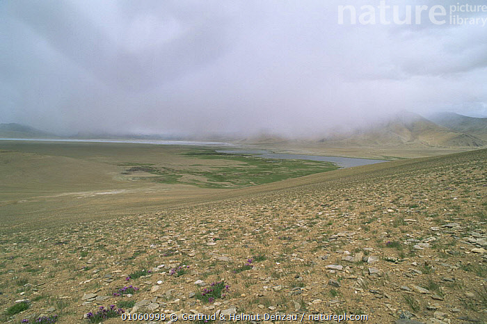 Tibetan Plateau landscape, with rain clouds encompassing the valley. Ladakh, NE India, ASIA,CLOUDS,HORIZONTAL,INDIAN SUBCONTINENT,LANDSCAPES,MOUNTAINS,RAIN,Weather,INDIAN-SUBCONTINENT, Gertrud & Helmut Denzau