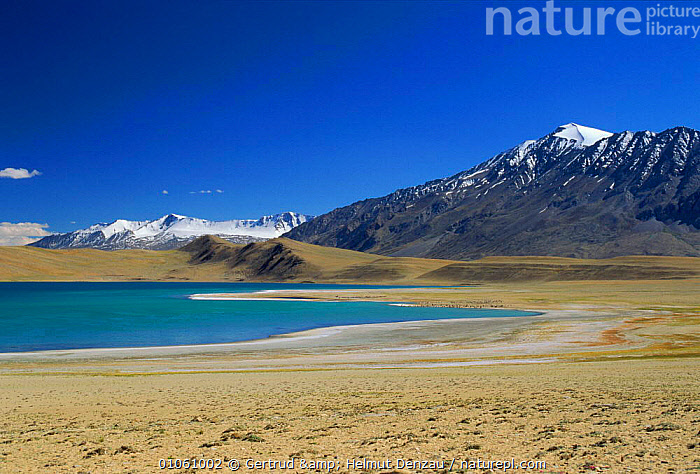 Tsomoris Lake (salt lake) with snow-capped mountains in background, Ladakh, North East India, ALPINE,ASIA,HIGHLANDS,himalayas,LAKES,LANDSCAPES,MOUNTAINS,saltwater,WATER,INDIAN-SUBCONTINENT, Gertrud & Helmut Denzau