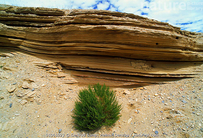 Transect of rock face showing the strata layers, Tibetan Plateau, Ladakh, North East India, ASIA,EROSION,GEOLOGY,indian subcontinent,ROCKS,INDIAN-SUBCONTINENT, Gertrud & Helmut Denzau