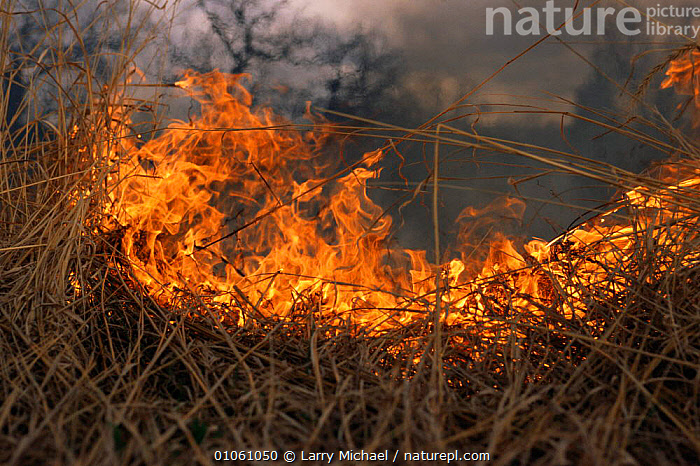 Prairie fire restoration conservation project, Wisconsin, USA, burn,burning,CONSERVATION,FIRE,GRASSLAND,land management,LANDSCAPES,management,NORTH AMERICA,USA, Larry Michael