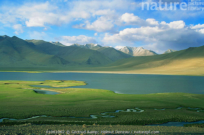 Landscape with alpine lake and meandering river with mountains in background, Ladakh, North East India, ALPINE,ASIA,HIGHLANDS,himalayas,INDIAN SUBCONTINENT,LAKES,LANDSCAPES,MOUNTAINS,RIVERS,INDIAN-SUBCONTINENT, Gertrud & Helmut Denzau