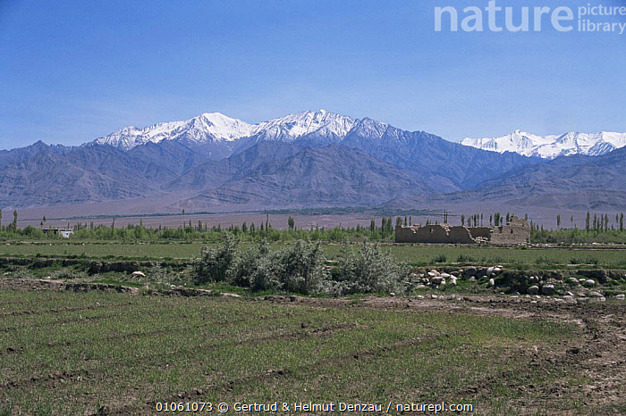 She village in the Indus Valley, Ladakh, NE India, ASIA,BUILDINGS,HORIZONTAL,INDIAN SUBCONTINENT,LANDSCAPES,MOUNTAINS,PEACEFUL,Concepts,INDIAN-SUBCONTINENT, Gertrud & Helmut Denzau