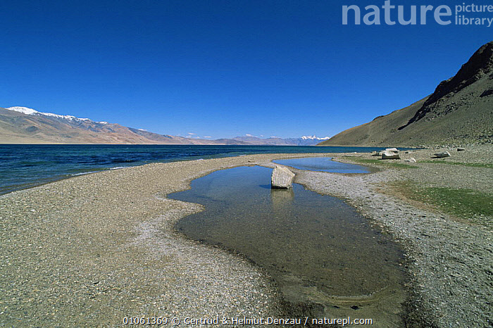 Overflow pools next to lake in mountains, Ladakh, India  ,  ASIA,GLACIAL,GLACIAL FEATURES,HORIZONTAL,INDIAN SUBCONTINENT,LANDSCAPES,MOUNTAINS,WATER,Geology,INDIAN-SUBCONTINENT  ,  Gertrud & Helmut Denzau