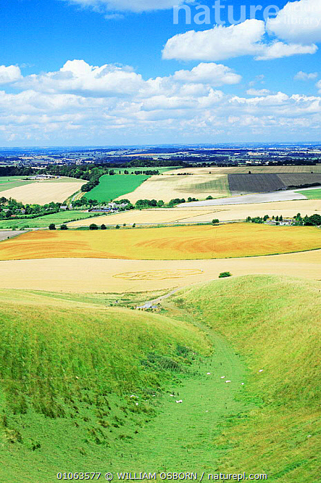 View from Cherill Down with crop circle in foreground, Wiltshire Downs, UK, AGRICULTURE,CROP CIRCLES,CROPS,ENGLAND,EUROPE,LANDSCAPES,UK,VERTICAL,United Kingdom,British, WILLIAM OSBORN
