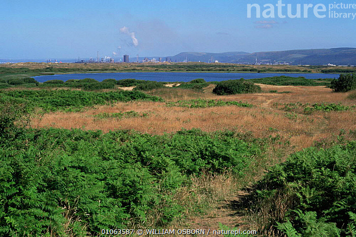 Kenfig National Nature Reserve with Fort Talbot chemical plant in distance, Wales, BUILDINGS,coastal,COASTS,CONSERVATION,EUROPE,FERNS,INDUSTRIAL,INDUSTRY,LANDSCAPES,MARINE,RESERVE,UK,WALES,United Kingdom,Plants,British, United Kingdom, United Kingdom, WILLIAM OSBORN