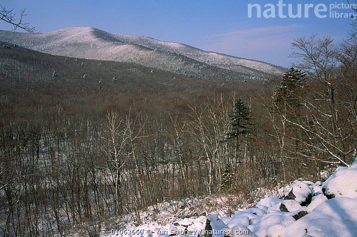 Looking out onto early spring woodland landscape, Primorsky region, Far East Russia (Ussuriland)., ASIA,BROADLEAF,deciduous,LANDSCAPES,RUSSIA,SNOW,SPRING,WINTER,WOODLANDS,CIS, Yuri Shibnev