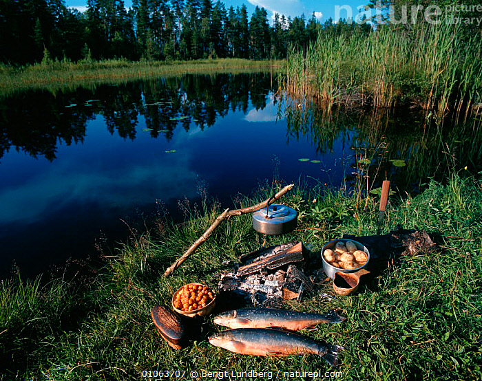 Camp fire meal prepared from regional foods. Sweden., FOOD,HORIZONTAL,LANDSCAPES,LEISURE,LAKES,FISH,FRESHWATER,CAMP,BERRIES,PLANTS,WATER,BLU,MEAL,BENGT,EDIBLE,POTATOES,FIRE,HOLIDAYS,LUNDBERG,CONCEPTS,Europe, Scandinavia, Bengt Lundberg