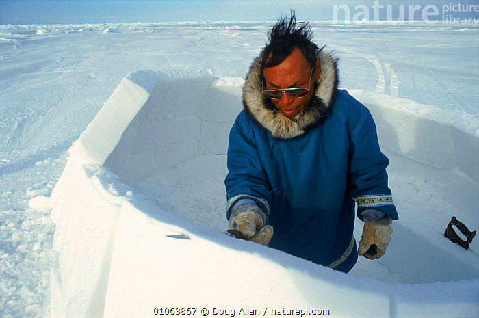 Man building an igloo, Baffin Island, Canadian Arctic Islands. Sequence, ADMIRALITY,ALLAN,BAFFIN,BAY,BLOCKS,BUILDING,BUILDINGS,CANADIAN,CULTURES,CUTTING,DA,DOUG,HOMES,HORIZONTAL,ICE,IGLOO,INUIT,ISLET,MAKING,MAN,PEOPLE,SNOW,TRADITIONAL,WINTER,North America, Doug Allan