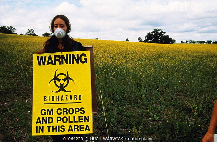 Protester with Biohazard warning sign for genetically modified (GM) oil seed rape test crop, Model Farm, Watlington, Oxfordshire, UK 1999, AGRICULTURE,CROPS,demonstration,EUROPE,HORIZONTAL,PEOPLE,PROTESTS,SCIENCE,SIGNS,UK,United Kingdom,British,ENGLAND, HUGH WARWICK