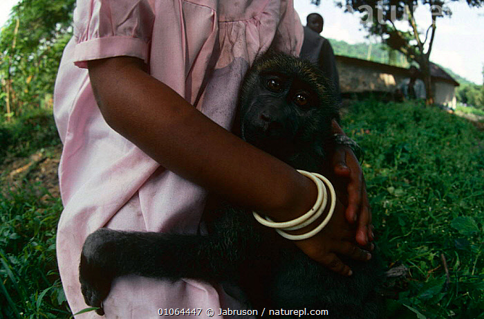 Young Olive baboon {Papio anubis} clings to keeper, Virunga NP, Dem Rep Congo, BABOONS,CENTRAL AFRICA,Frightened,MAMMALS,MONKEYS,PEOPLE,PRIMATES,REHABILITATION,RESERVE,SAD,VERTEBRATES,Africa,Concepts , Bruce Davidson, Jabruson