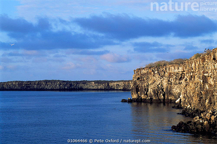 Darwin Bay landscape, Tower / Genovesa Island, Galapagos Islands., CLIFFS,COASTS,GALAPAGOS,LANDSCAPES,PACIFIC ISLANDS,ROCKS,SOUTH AMERICA,WATER,Geology,SOUTH-AMERICA, Pete Oxford