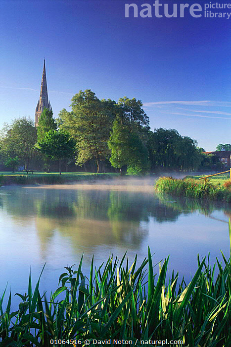 Salisbury Cathedral from across the River Nadder, Salisbury Wiltshire, England, UK, BUILDINGS,CATHEDRAL,DNO,LANDSCAPE,LANDSCAPES,RIVER,RIVERS,SALISBURY,SCENIC,SUMMER,TRANQUILITY,UK,VERTICAL,WATER,EUROPE,UNITED KINGDOM,BRITISH ,CHURCHES,ENGLAND, David Noton
