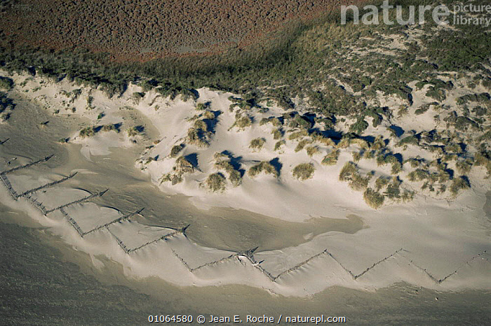 """Aerial view of Sand dunes fixed by """"ganivelles"""" to prevent erosion, Camargue National Reserve, France, COASTS,EUROPE,FRANCE,LANDSCAPES,PLANTS,RESERVE, Jean E. Roche"""