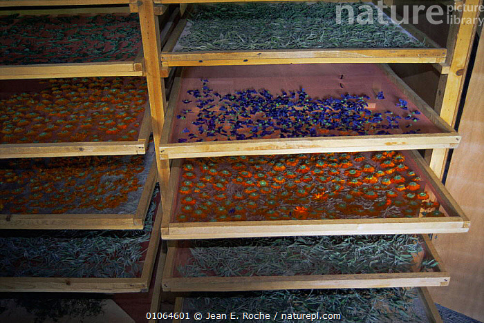 Plant drier with various harvested flowers and seeds, Buech, Provence, France, AGRICULTURE,CROPS,EUROPE,FRANCE,HARVESTING,PLANTS, Jean E. Roche
