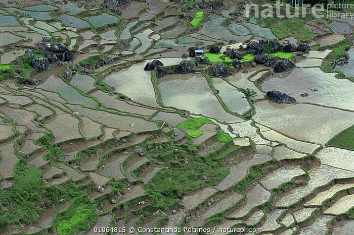 Landscape looking down onto rice paddy fields, Central Sulawesi, Indonesia, ABSTRACT,AGRICULTURE,ASIA,CLOUDS,CROPS,FARMLAND,HORIZONTAL,INDONESIA,LANDSCAPES,MOUNTAINS,PATTERNS,SOUTH EAST ASIA,TRADITIONAL,TREES,WATER,Weather,Plants,SOUTH-EAST-ASIA, Constantinos Petrinos