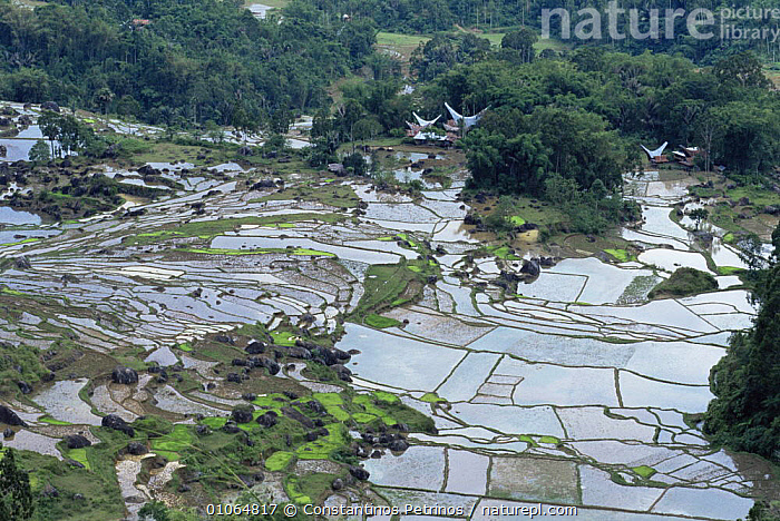 Landscape looking down onto flooded rice paddy fields, Central Sulawesi, Indonesia, AERIALS,AGRICULTURE,ASIA,BUILDINGS,CLOUDS,CROPS,FARMLAND,HORIZONTAL,INDONESIA,LANDSCAPES,MOUNTAINS,PATTERNS,SOUTH EAST ASIA,TRADITIONAL,TREES,WATER,Weather,Plants,SOUTH-EAST-ASIA, Constantinos Petrinos