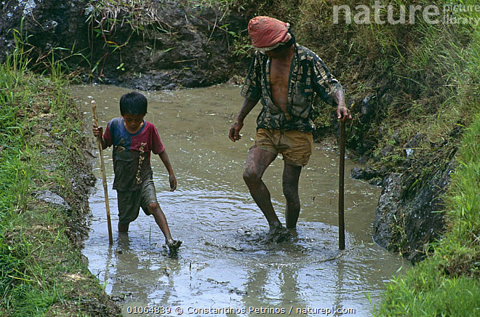 Young boy and man working in rice field (child labour) Central Sulawesi, Indonesia 2000.  ,  AGRICULTURE,ASIA,CHILD,CROPS,INDONESIA,MAN,PEOPLE,SOUTH EAST ASIA,TRADITIONAL,WATER,WORKING,SOUTH-EAST-ASIA  ,  Constantinos Petrinos