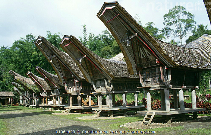 Traditional Tana Toraja houses, Tongkonan, Central Sulawesi, Indonesia, ASIA,BUILDINGS,CULTURES,HOMES,INDONESIA,INTERESTING,SOUTH EAST ASIA,TRADITIONAL,TRIBES,SOUTH-EAST-ASIA, Constantinos Petrinos
