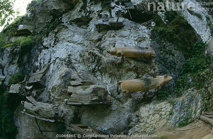 Wooden coffins at cliffside, Tana Toraja, Central Sulawesi, Indonesia, ARTY SHOTS,ASIA,CLIFFS,CULTURES,DEATH,INDONESIA,ROCK FORMATIONS,ROCKS,SOUTH EAST ASIA,TRADITIONAL,TRIBES,Geology,SOUTH-EAST-ASIA, Constantinos Petrinos