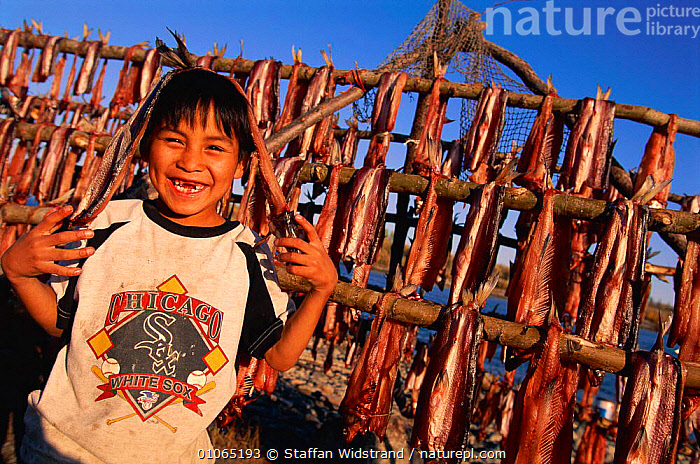 Inupiat Dennis Cleveland Amber, young boy next to fish harvest, Kobuk Valley NP, Alaska, CULTURES,ESKIMO,FACES,FOOD,HARVESTING,HEADS,HUNTING FOOD,INUIT,LANDSCAPES,PEOPLE,TRADITIONAL,TRIBES,USA,North America, Staffan Widstrand