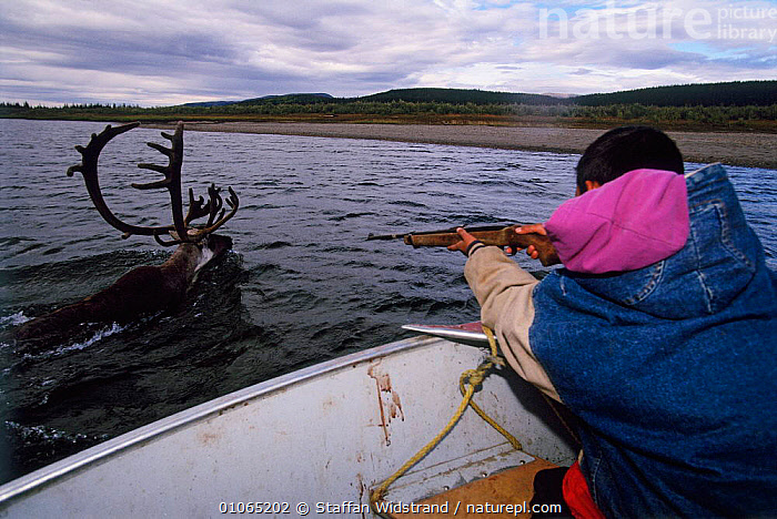 Boy about to shoot his first caribou {Rangifer tarandus}, Kobuk Valley NP, Alaska, USA  ,  ANTLERS,ARTIODACTYLA,BOATS,DEER,GUNS,HUNTING FOOD,MALES,MAMMALS,PEOPLE,RIVERS,SAD,TRADITIONAL,TRIBES,WATER,Concepts,USA,North America  ,  Staffan Widstrand