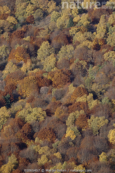 Aerial view of deciduous autumn woodland, Puy de Dome, France  ,  AERIALS,ARTY SHOTS,AUTUMN,BROADLEAF,EUROPE,FRANCE,MIXED WOOD,PATTERNS,TREES,VERTICAL,Plants  ,  Martin Dohrn