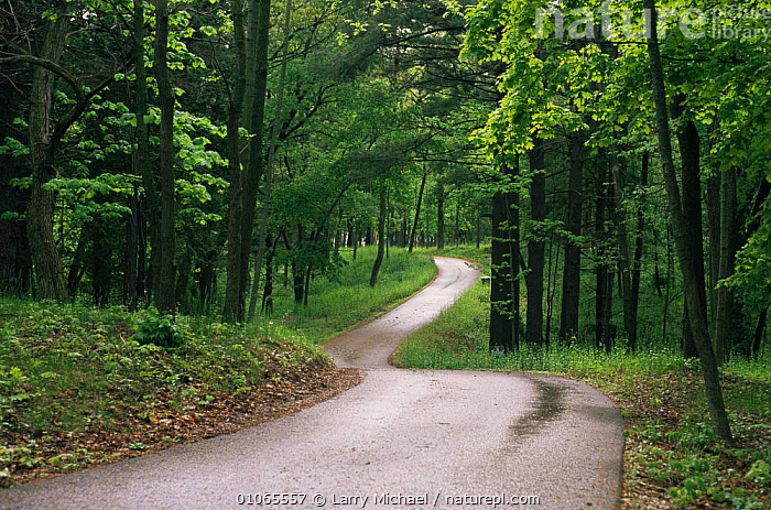 Country road through mixed woodland, Michigan, USA  ,  LANDSCAPES,LEAVES,NORTH AMERICA,ROADS,SPRING,TREES,USA,WOODLANDS,Plants  ,  Larry Michael