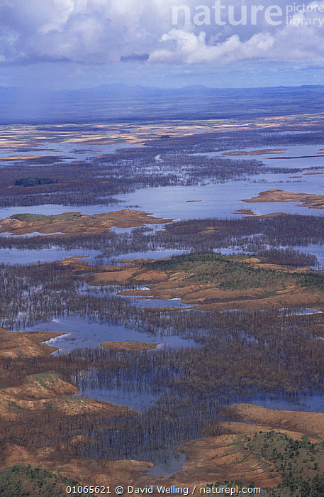 Aerial floodplain landscape, near Canaima National Park, Venezuela, South America, LANDSCAPES,PEACEFUL,SOUTH AMERICA,TREES,VERTICAL,WATER,Concepts,Plants,SOUTH-AMERICA, David Welling