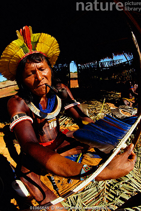 Kayapo warrior making head dress from parrot feathers, Amazon, Brazil, ARTIFACTS,BASIN,BIRDS,LANDSCAPES,MAN,PEOPLE,RAINFOREST,RIVER,SETTLEMENT,SYSTEM,TRIBES,TROPICAL RAINFOREST,VERTICAL,VILLAGES,XINGU,SOUTH-AMERICA, Martin Dohrn