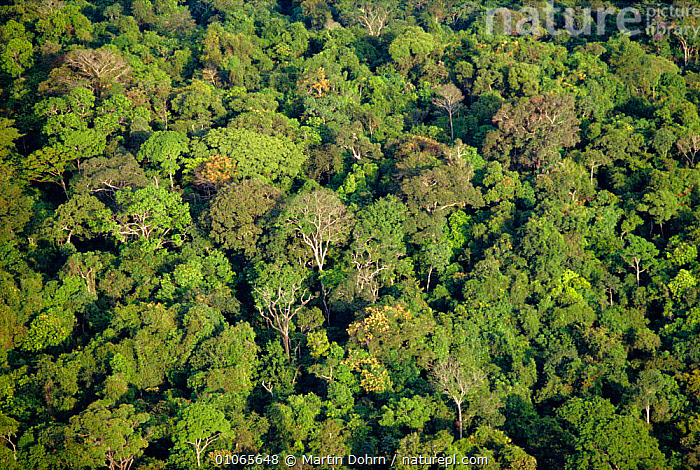 Aerial shot of Amazon rainforest, Brazil, ABSTRACT,AERIAL,AMAZON,CANOPY,PATTERNS,PLANTS,SOUTH AMERICA,TREES,TROPICAL RAINFOREST ,AERIALS,SOUTH-AMERICA, Martin Dohrn