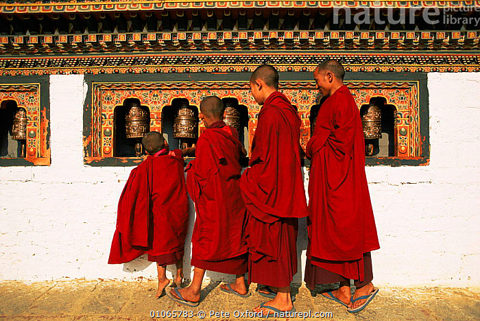 Four young Buddhist monks turning prayer wheels, Dzongchung temple, Punakha dzong, Bhutan. 2001, ASIA,buddhism,CHILDREN,PEOPLE,Religion,TRADITIONAL,INDIAN-SUBCONTINENT, Pete Oxford