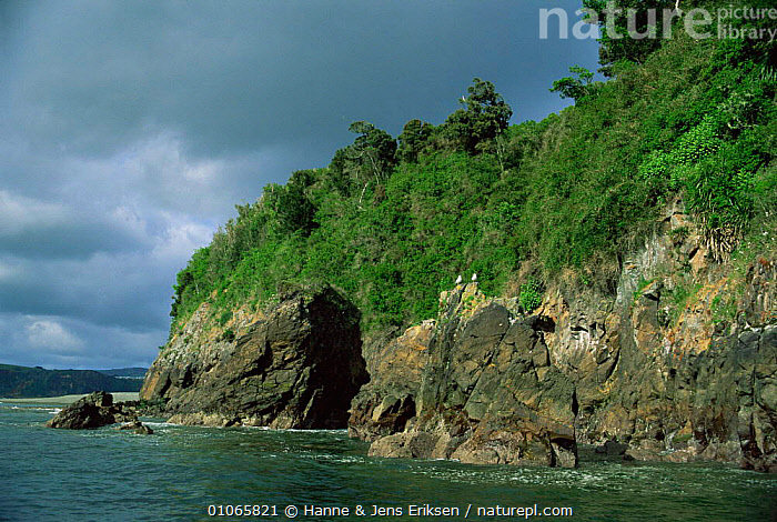 Rugged coastline of Chiloe Island, Chile, South America, BEACHES,CLIFFS,COASTAL WATERS,COASTS,LANDSCAPES,MARINE,ROCK FORMATIONS,SEA,SHORELINE,SOUTH AMERICA,TREES,Geology,Plants,SOUTH-AMERICA, Hanne & Jens Eriksen