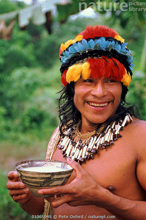 Indian in traditional Zaparo dress with drink. Llanchamacocha, Amazonian Ecuador, FEATHERS,MALES,TRIBES,PETER,AMAZONIA,PORTRAITS,LLANCHAMACOCHA,ARTIFACTS,MAN,OXFORD,COLOURFUL,VERTICAL,ADORNMENT,INDIAN,DRESS,PEOPLE,PO,ZAPARO,HEAD DRESS,TRADITIONAL, Pete Oxford