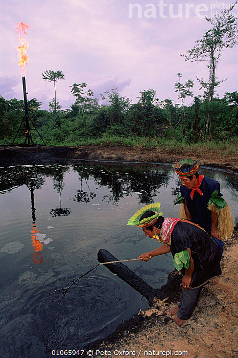 Cofan Indians inspecting oil waste pit. Amazonian Ecuador  ,  INDIANS,PIT,TROPICAL,INSPECTING,VERTICAL,PEOPLE,WASTE,CRUDE OIL,OXFORD,PO,COFAN,OIL,RAINFOREST,PETER,POLLUTION,TRIBES,AMAZONIA  ,  Pete Oxford