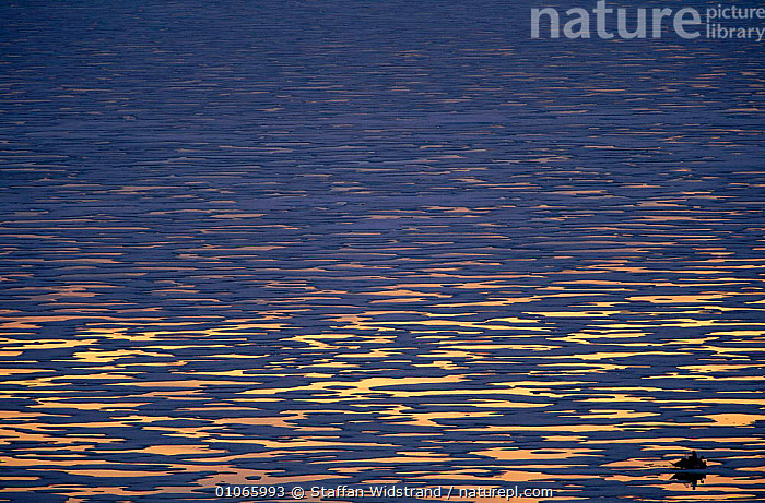 Midnight sun reflections on sea, Baffin Island, Nunavut, Canada. May, ABSTRACT,ARCTIC,LANDSCAPES,MARINE,NIGHT,PATTERNS,North America,CANADA, Staffan Widstrand